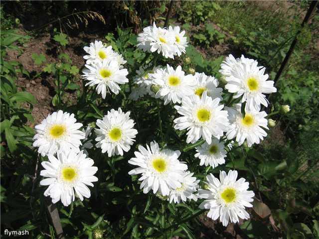 Во саду ли, в огороде... - Страница 2 20c57765fd55