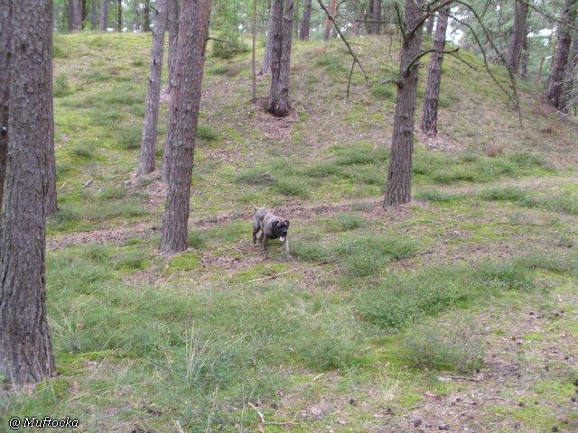 Наши собаки, друзья и гости, кот Мензурка 3f913313be2b