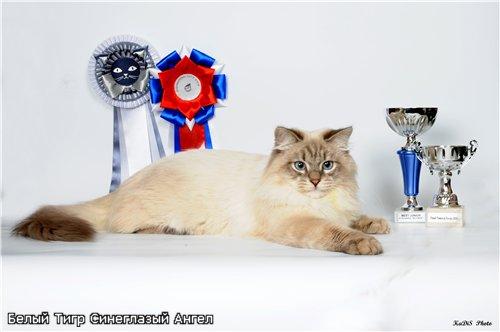 Форум для любителей кошек - Портал 32a31e002735