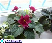 наши домашние цветники - Страница 2 E50cd0754181t