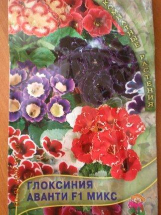 Размножение глоксиний семенами - Страница 12 8eaeea6da6d0
