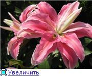 ЛИЛИИ C451bc5196b1t