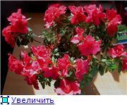 наши домашние цветники A69573786196t