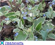 Растения для тени или Тенистый сад. 27b8f0828bdft