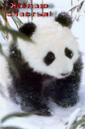 Олечку (panda) С ДНЕМ РОЖДЕНИЯ 758f2775cab1