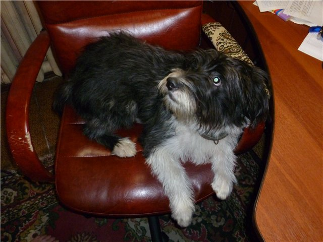 Моя первая собака. C59e1dab68e0