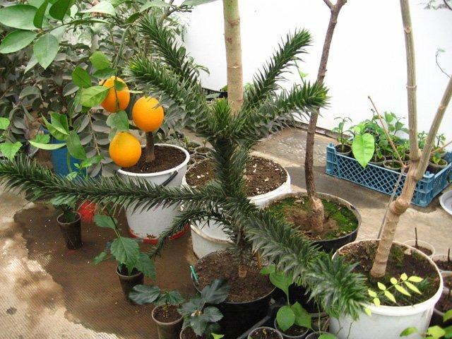 Растения из Нижегородской оранжереи 523746425109