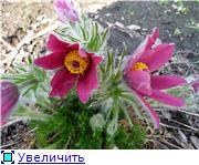 Весна идёт... 71758f844d87t