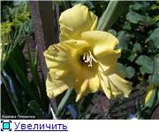 Гладиолусы - Страница 2 E7c16376af80t