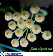 наши домашние цветники - Страница 2 76a446c6740ft