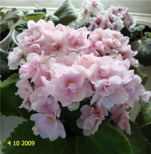 мои любимые цветочки - Страница 2 171412865a00
