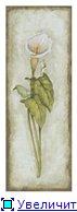 Цветы, букеты E503f2a1b014t