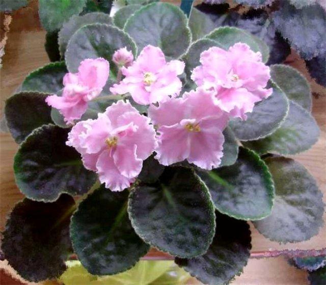 Розовая Акварель (Морев) B98dc14bce79