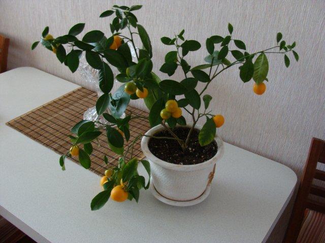 Плодовые - Страница 4 E0792e0d088a