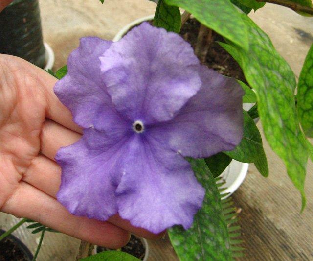 Растения из Нижегородской оранжереи 900402f280c5