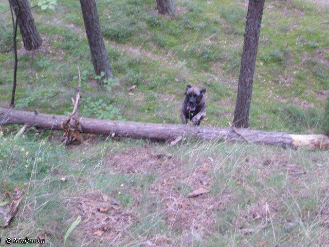 Наши собаки, друзья и гости, кот Мензурка Ee391444fc35