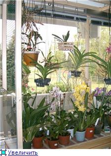 Размещение орхидей Dfc90affe55bt