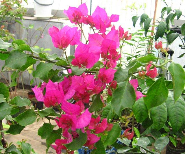 Растения из Нижегородской оранжереи Ec5efb7870b4
