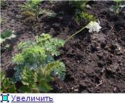 Лето в наших садах - Страница 2 Efad9e484803t