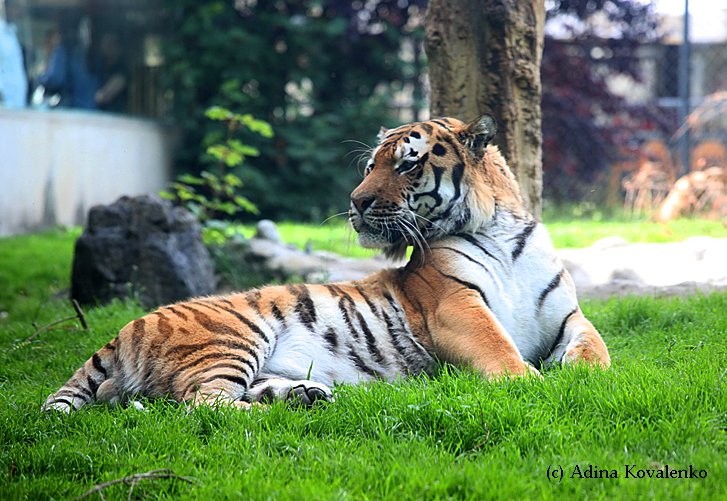 Швейцарский зоопарк 923ef645c563