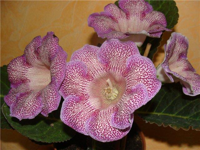 Весеннее  цветение (Хваст от Веры) - Страница 8 05b242053ae4