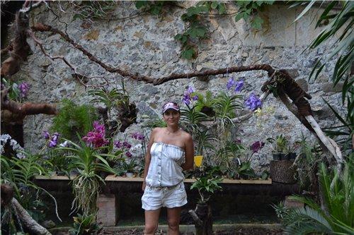 Выставка орхидей Никитского ботанического сада 19ef7c57f8f7