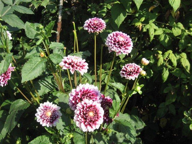 Во саду ли, в огороде... - Страница 6 3fc9f4c65576