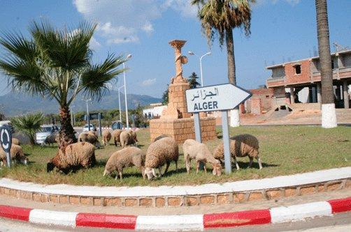 صور مضحكة من الجزائر العميقة Af276a30bb84