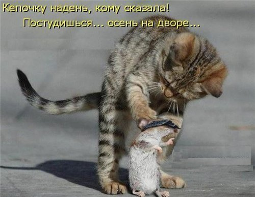 Фотографии кошек 7fc19aad491c