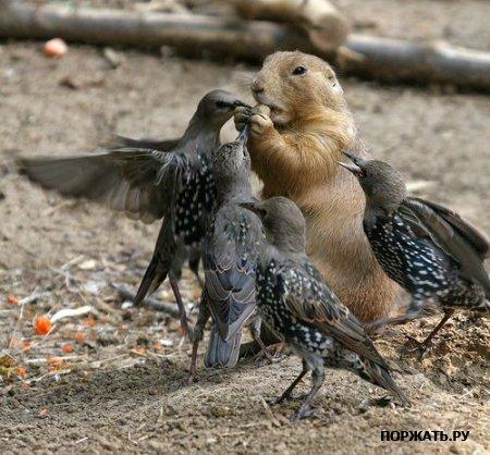 Фото птиц E7047413411a