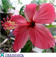 наши домашние цветники Dcd388e0534et