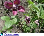 Лето в наших садах - Страница 3 50627d86e17ft