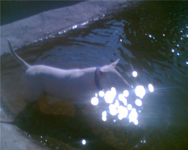 Собака-праздник! Сегодня и каждый день на арене Жоринька!!! - Страница 2 F8e97a4d786c