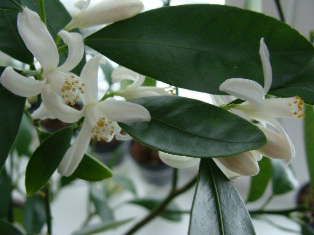 Мои цветочки - Страница 32 Da87f012126a
