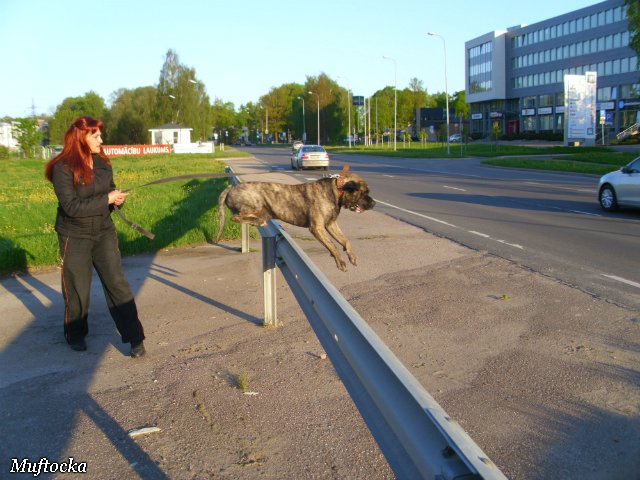 Собаки Татьяны Моисеенковой, кот Мензурка - Страница 4 8b32fdff994d