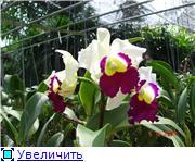 Орхидеи и прочая красота на о. Пхукет C14334c56c3ct