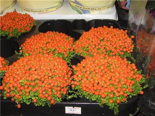 Ландшафт и приусадебное хозяйство - Весна 2009. - Страница 2 1c4a31369824