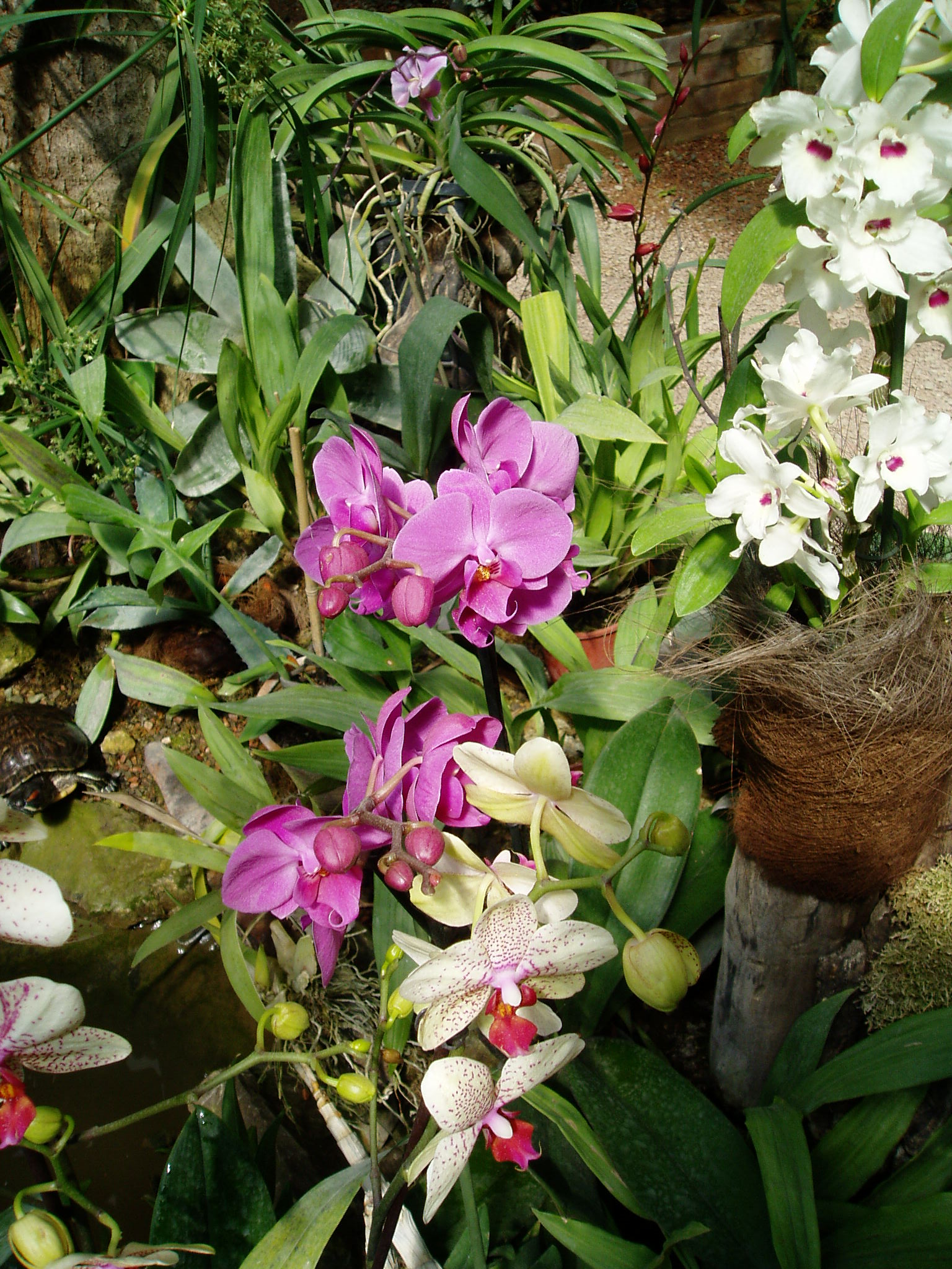 Выставка Орхидей A0995ec5749f
