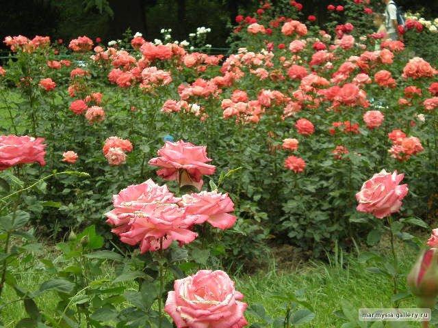 Крым. Никитский ботанический сад. 64683fb2bf70