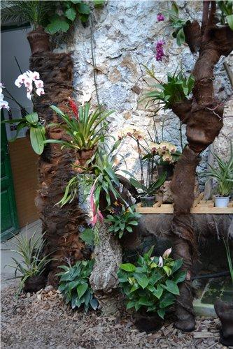 Выставка орхидей Никитского ботанического сада 7560f3be3ea0