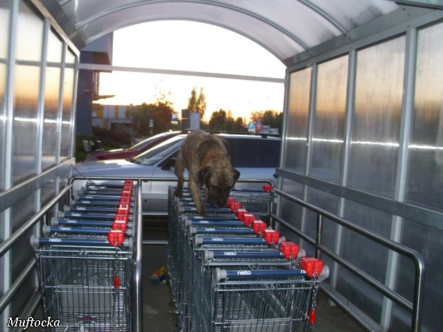 Собаки Татьяны Моисеенковой, кот Мензурка - Страница 4 3a4c71de0143