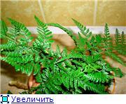 ФУКСИИ В ХАБАРОВСКЕ  - Страница 11 5d67806850a7t