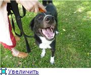 Чара - потрясающая собака! Ищет лучших хозяев! 0cf8b26abf8at