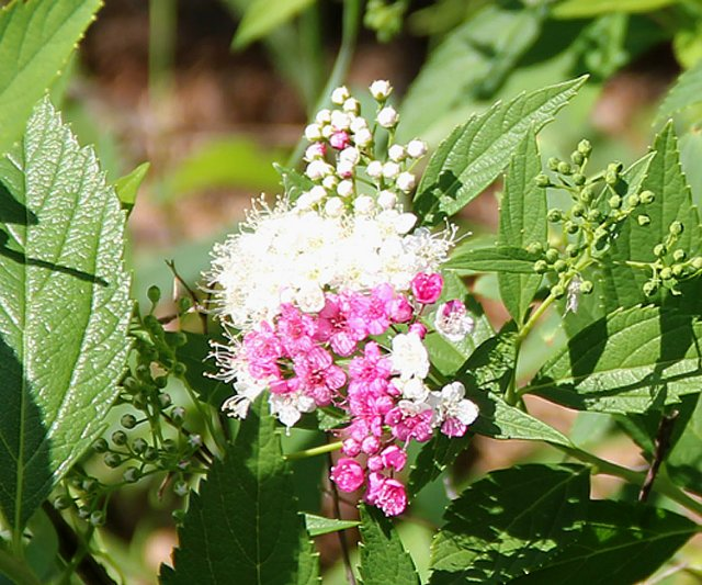 Экскурсия по Ботаническому Саду A49120979b03