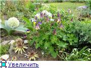 Растения для альпийской горки. - Страница 2 Cf83dcefdd26t