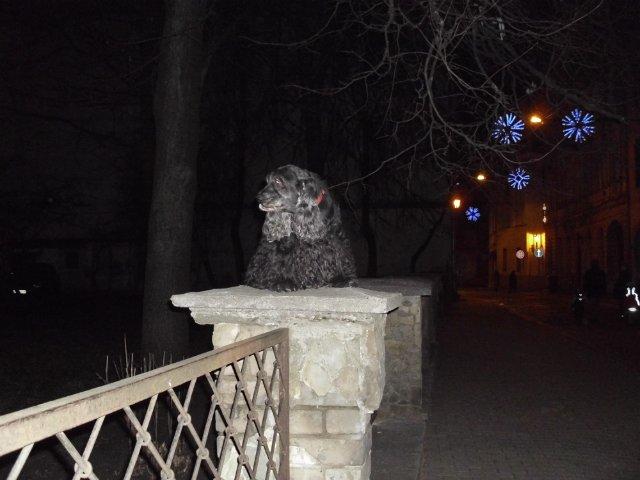Собаки Татьяны Моисеенковой, кот Мензурка - Страница 3 D2a664e09fd9
