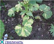 Весенне цветущие 0692cf083013t