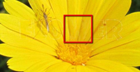 Как убрать водяные знаки с картинки 99aff66e3129