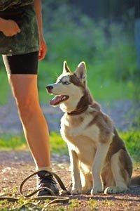 Рекомендации по воспитанию щенка (4-6 месяцев) 5ba3151ca069