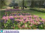 Наши домашние растения - Страница 2 F391d8d6ff9bt